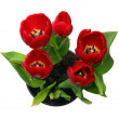 Red tulips in pot — Stock Photo