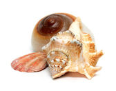Group of seashells — Stock Photo