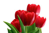 Bouquet of red tulips close-up — Stock Photo
