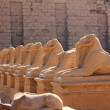 Egypt statues of sphinx in karnak temple — Stock Photo