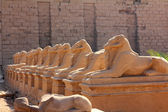 Estatuas de egipto de la esfinge en el templo de karnak — Foto de Stock