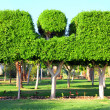 Trimmed trees in garden — Stock Photo #5111555