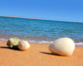 Defocused seashells on beach — Stock Photo