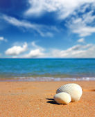 View on seashells on beach — Stock Photo