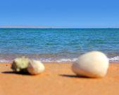 Defocused seashells on beach — Stock Photo