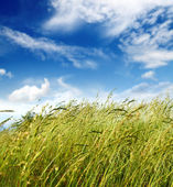 Grass and wind blowing — Stock Photo