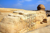 Famous egypt sphinx in Giza from behind — Stock Photo