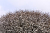 Close-up frozen trees — Stock Photo