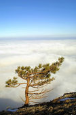 Isolated pine-tree on the top of mountain — Stock Photo