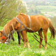 Two horses are grazing — Foto de Stock