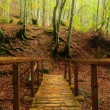 Wooden bridge in autumnal forest — Stock Photo