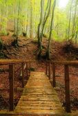 Wooden bridge in autumnal forest — Stock Photo