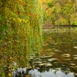 Autumn lake — Stock Photo #4365910