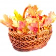 Maple leaves in basket — Stock Photo #4365965