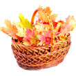 Maple leaves in basket — Stock Photo