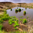 Bog in mountains — Stock Photo
