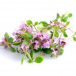 Thyme isolated — Stock Photo #4408434
