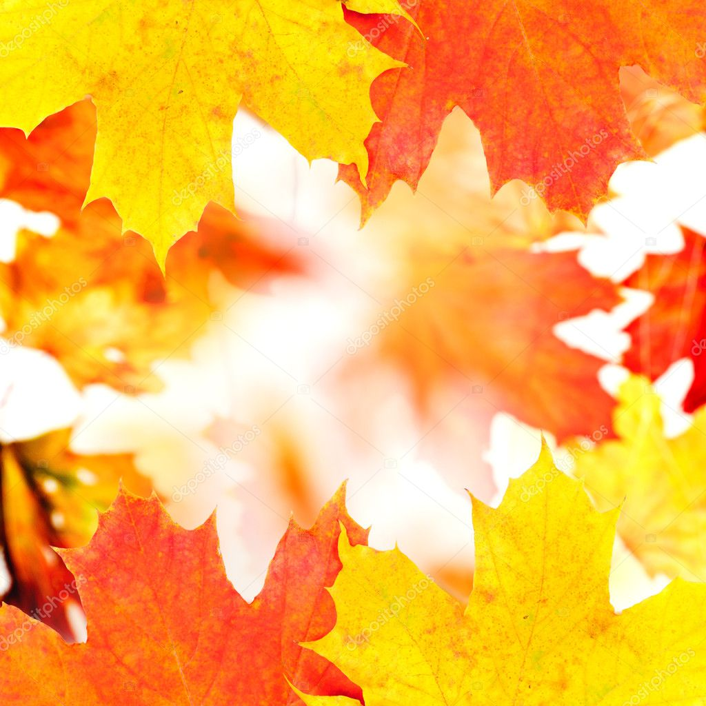 秋天的树叶背景 — 图库照片08oksixx#4408420