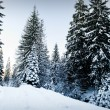 Stock Photo: Winter fir-tree forest