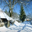 Winter house in fir-tree forest — Stock Photo