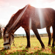 Horse on pasture in evening glow — Foto de Stock