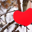 Red heart on snow tree — Stock Photo