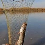 redes de pesca de Lucio — Foto de Stock