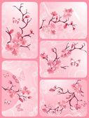 Cherry blossom set — Stock Vector