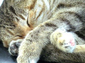 Gray cat home — Stock Photo