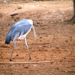 Secretary bird — Stock Photo #4451403