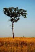 Lonely tree — Stockfoto