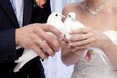 Two white doves — Stock Photo