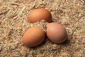 Three brown eggs on sawdust — Stock Photo