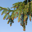 Fir branch over blue sky - Stock Photo