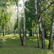 Stock Photo: Sunlight in the forest