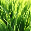 Green grass and sun beams — Stock Photo