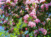 Branch of a blossoming tree — Stock Photo