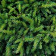 Green fir texture — Foto de Stock