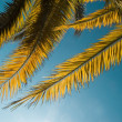 Branch of the palm tree — Stock Photo