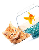 Goldfish and cat — Stock Photo