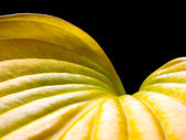 Yellow leaf. — Stock Photo