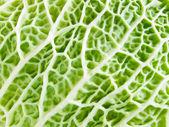 Vert texture organique. — Photo