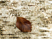 Dried brown leaf. — Stock Photo