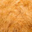 Orange fur. — Stock Photo