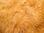 Oranje bont. — Stockfoto