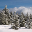 Wintry forest — Stock Photo #4817547