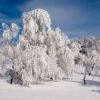 Snowy forest. — Stock Photo