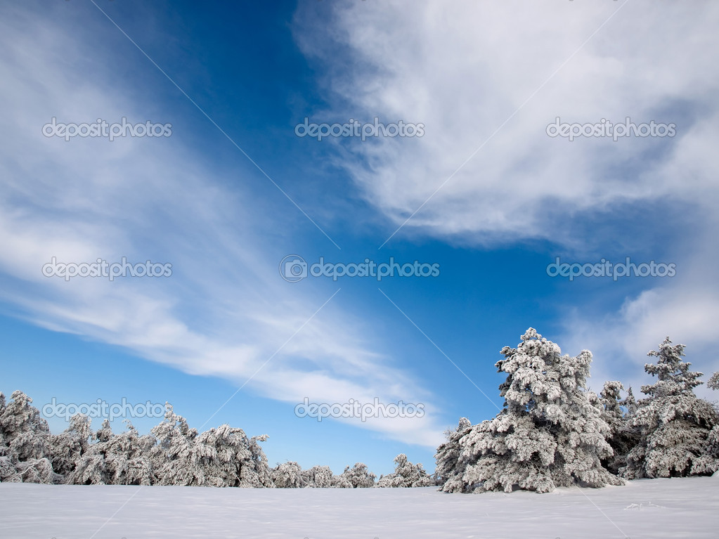 Wintry spruce forest. — Stock Photo #4817554