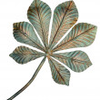 Bronze chestnut leaf. - Stock Photo