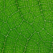 Green leaf. — Stockfoto